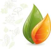 πράσινα φύλλα σχεδίου απεικόνιση αποθεμάτων