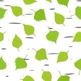 Πράσινα φύλλα της πτώσης σημύδων απεικόνιση αποθεμάτων