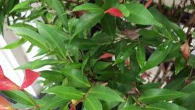 πράσινα φύλλα τροπικά Ηλιόλουστη ημέρα στο τροπικό νησί του Μπαλί, Ινδονησία Ομαλή κίνηση απόθεμα βίντεο