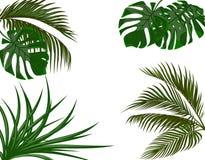 Πράσινα φύλλα των τροπικών φοινίκων Monstera, αγαύη η ανασκόπηση απομόνωσε το λευκό απεικόνιση Στοκ Φωτογραφίες