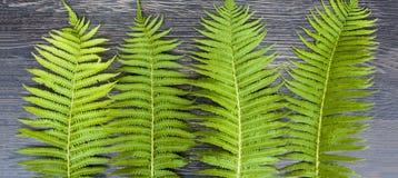 Πράσινα φύλλα των φτερών σε ένα σκοτεινό ξύλινο υπόβαθρο απαγορευμένα στοκ φωτογραφίες με δικαίωμα ελεύθερης χρήσης