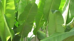 Πράσινα φύλλα των φυτών που κινούνται από τον αέρα απόθεμα βίντεο