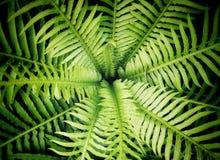 Πράσινα φύλλα φτερών στοκ φωτογραφία