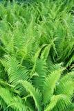 πράσινα φύλλα φτερών Στοκ φωτογραφίες με δικαίωμα ελεύθερης χρήσης