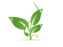πράσινα φύλλα ελεύθερη απεικόνιση δικαιώματος