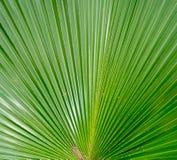 Πράσινα φύλλα Patern Στοκ φωτογραφία με δικαίωμα ελεύθερης χρήσης