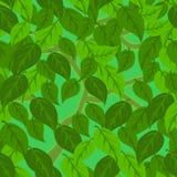 πράσινα φύλλα άνευ ραφής Στοκ Εικόνα