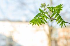 Πράσινα φύλλα δέντρων στο άσπρο διάστημα αντιγράφων Στοκ εικόνες με δικαίωμα ελεύθερης χρήσης
