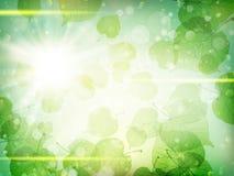 πράσινα φύλλα ανασκόπησης ακακιών 10 eps Στοκ Φωτογραφία