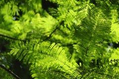 Πράσινα φύλλα κάτω από την ηλιοφάνεια Στοκ Εικόνες