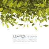 Πράσινα φύλλα κάλυψης σε ένα άσπρο υπόβαθρο Στοκ Εικόνες