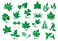 Πράσινα φύλλα και φυτά καθορισμένα Στοκ φωτογραφίες με δικαίωμα ελεύθερης χρήσης
