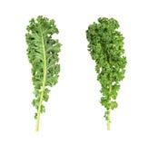 Πράσινα φύλλα κατσαρού λάχανου Resh στοκ φωτογραφίες