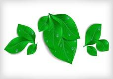 Πράσινα φύλλα με τα waterdrops Στοκ φωτογραφία με δικαίωμα ελεύθερης χρήσης