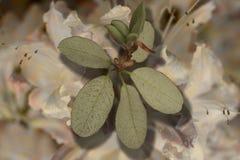 πράσινα φύλλα με τη σκιά Στοκ εικόνα με δικαίωμα ελεύθερης χρήσης