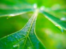 Πράσινα φύλλα που εκτίθενται στον ήλιο Στοκ Εικόνες