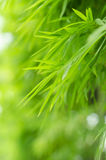 πράσινα φύλλα πλαισίων μπαμ& Στοκ Φωτογραφίες