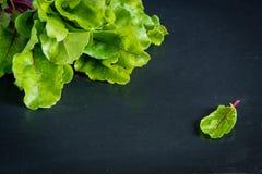 Πράσινα φύλλα ριζών τεύτλων στοκ φωτογραφία