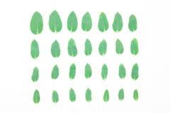 Πράσινα φύλλα σε μια σειρά Το σχέδιο, η σύνθεση των εγκαταστάσεων Στοκ Φωτογραφία
