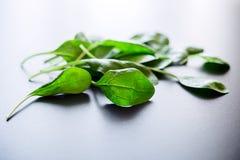 Πράσινα φύλλα σπανακιού σε ένα γκρίζο υπόβαθρο Στοκ φωτογραφία με δικαίωμα ελεύθερης χρήσης