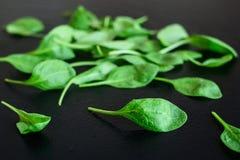 Πράσινα φύλλα σπανακιού σε ένα μαύρο υπόβαθρο Στοκ Εικόνα