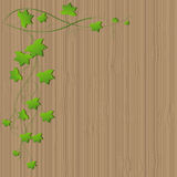 Πράσινα φύλλα σταφυλιών σε έναν ξύλινο πίνακα Στοκ Εικόνα