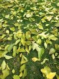 Πράσινα φύλλα στη χλόη Στοκ Εικόνες