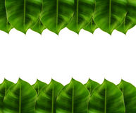 Πράσινα φύλλα στο άσπρο υπόβαθρο κεφαλιών & ποδιών Στοκ φωτογραφία με δικαίωμα ελεύθερης χρήσης