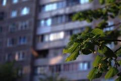 Πράσινα φύλλα στο υπόβαθρο του σπιτιού Στοκ εικόνα με δικαίωμα ελεύθερης χρήσης