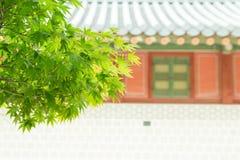 Πράσινα φύλλα σφενδάμου με το παλαιό κορεατικό παλάτι Στοκ εικόνες με δικαίωμα ελεύθερης χρήσης