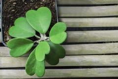 Πράσινα φύλλα την άνοιξη θερινή περίοδο Στοκ Φωτογραφίες