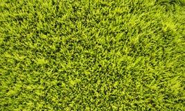 Πράσινα φύλλα τοίχων Στοκ εικόνες με δικαίωμα ελεύθερης χρήσης