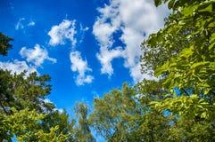 Πράσινα φύλλα των δέντρων στο μπλε ουρανό Στοκ Φωτογραφίες
