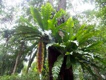 Πράσινα φύλλα των τροπικών φυτών, φτέρη φωλιών του μεγάλου πουλιού Στοκ εικόνες με δικαίωμα ελεύθερης χρήσης