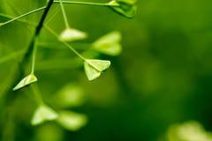 Πράσινα φύλλα υπό μορφή συμβόλου της αγάπης, μακροεντολή Στοκ φωτογραφία με δικαίωμα ελεύθερης χρήσης