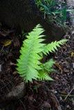 Πράσινα φύλλα φτερών Στοκ Εικόνα