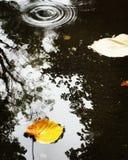 πράσινα φύλλα χλόης αρχής φθινοπώρου κίτρινα Στοκ Φωτογραφία