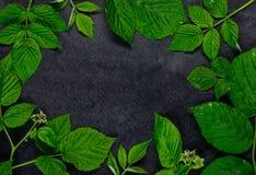 Πράσινα φύλλα ως διαστημικό πλαίσιο αντιγράφων Στοκ εικόνες με δικαίωμα ελεύθερης χρήσης