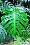 Πράσινα φύλλα Στοκ Φωτογραφία