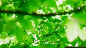πράσινα φύλλα απόθεμα βίντεο