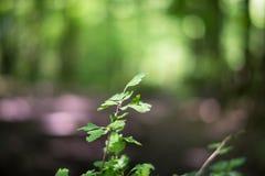 Πράσινα φύλλα bokeh Στοκ φωτογραφία με δικαίωμα ελεύθερης χρήσης