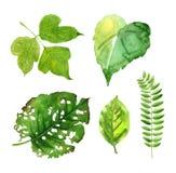 Πράσινα φύλλα watercolor Στοκ Φωτογραφίες