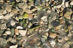 Πράσινα χαλίκια Στοκ Φωτογραφία