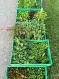 Πράσινα χορτάρια και λουλούδια στα πράσινα κιβώτια Στοκ εικόνες με δικαίωμα ελεύθερης χρήσης