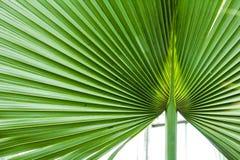 πράσινα λωρίδες Στοκ εικόνες με δικαίωμα ελεύθερης χρήσης