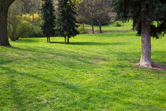 πράσινα δέντρα πάρκων Στοκ Εικόνες