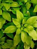 πράσινα Στοκ Φωτογραφίες