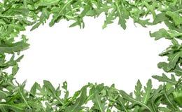 Πράσινα Arugula σε ένα άσπρο υπόβαθρο Στοκ εικόνες με δικαίωμα ελεύθερης χρήσης