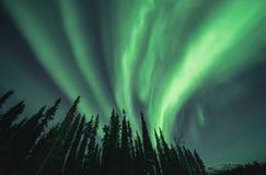 Πράσινα borealis αυγής που αερίζουν πρός τα πάνω επάνω από τα σκιαγραφημένα δέντρα Στοκ φωτογραφίες με δικαίωμα ελεύθερης χρήσης