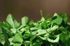 Πράσινα Fenugreek φύλλα Στοκ Εικόνες